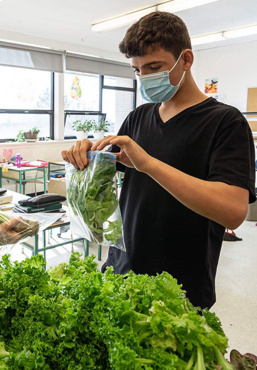 vireo boy salad school