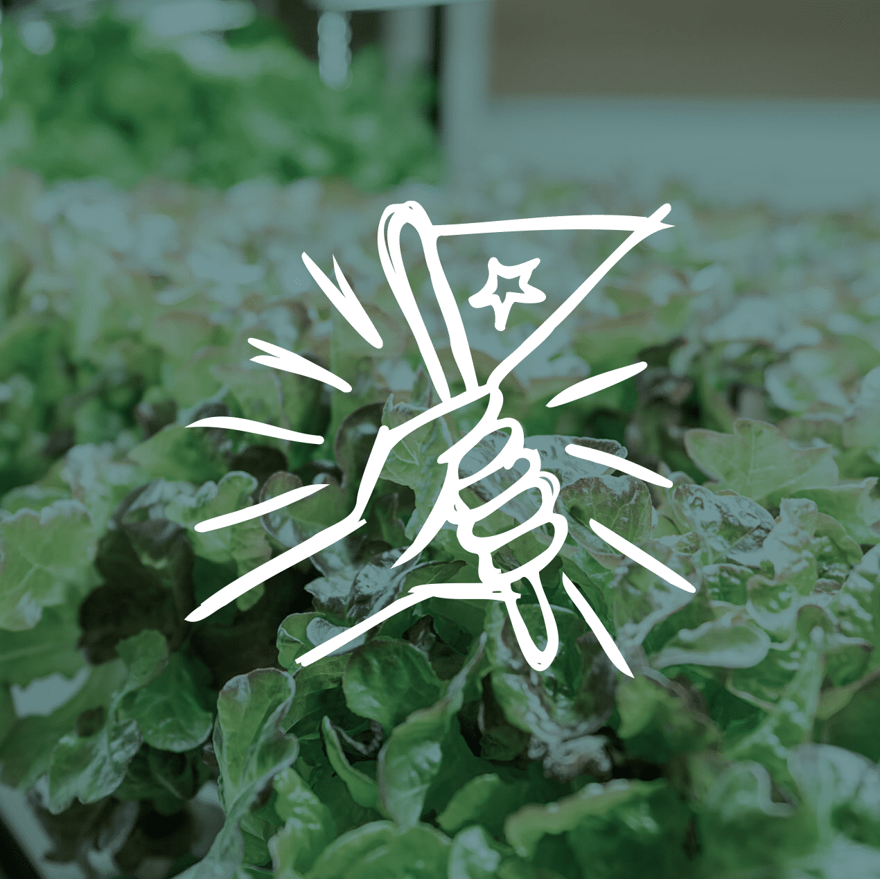 vireo support renew hydroponic garden