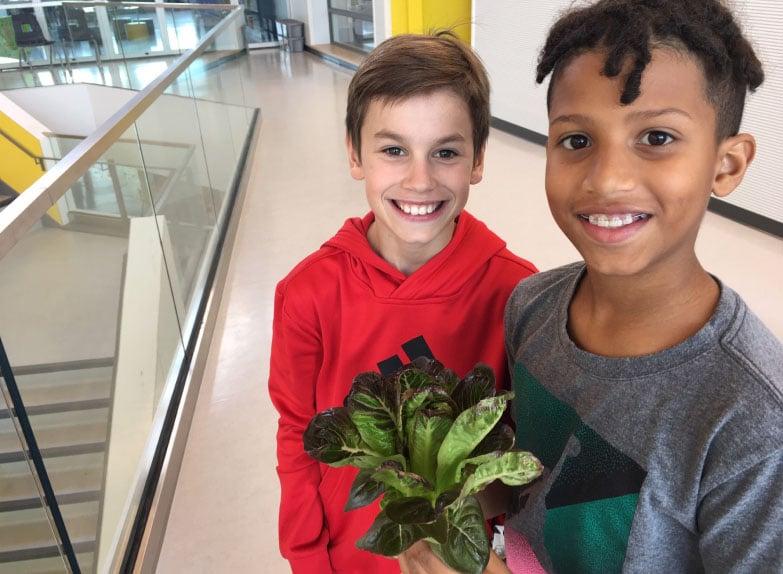 vireo kid culture harvest salad