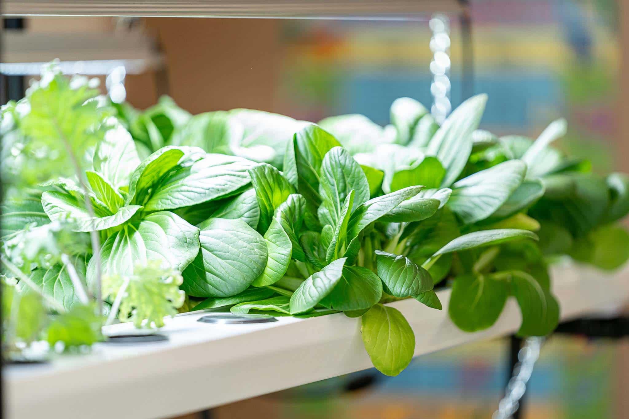 vireo garden salad