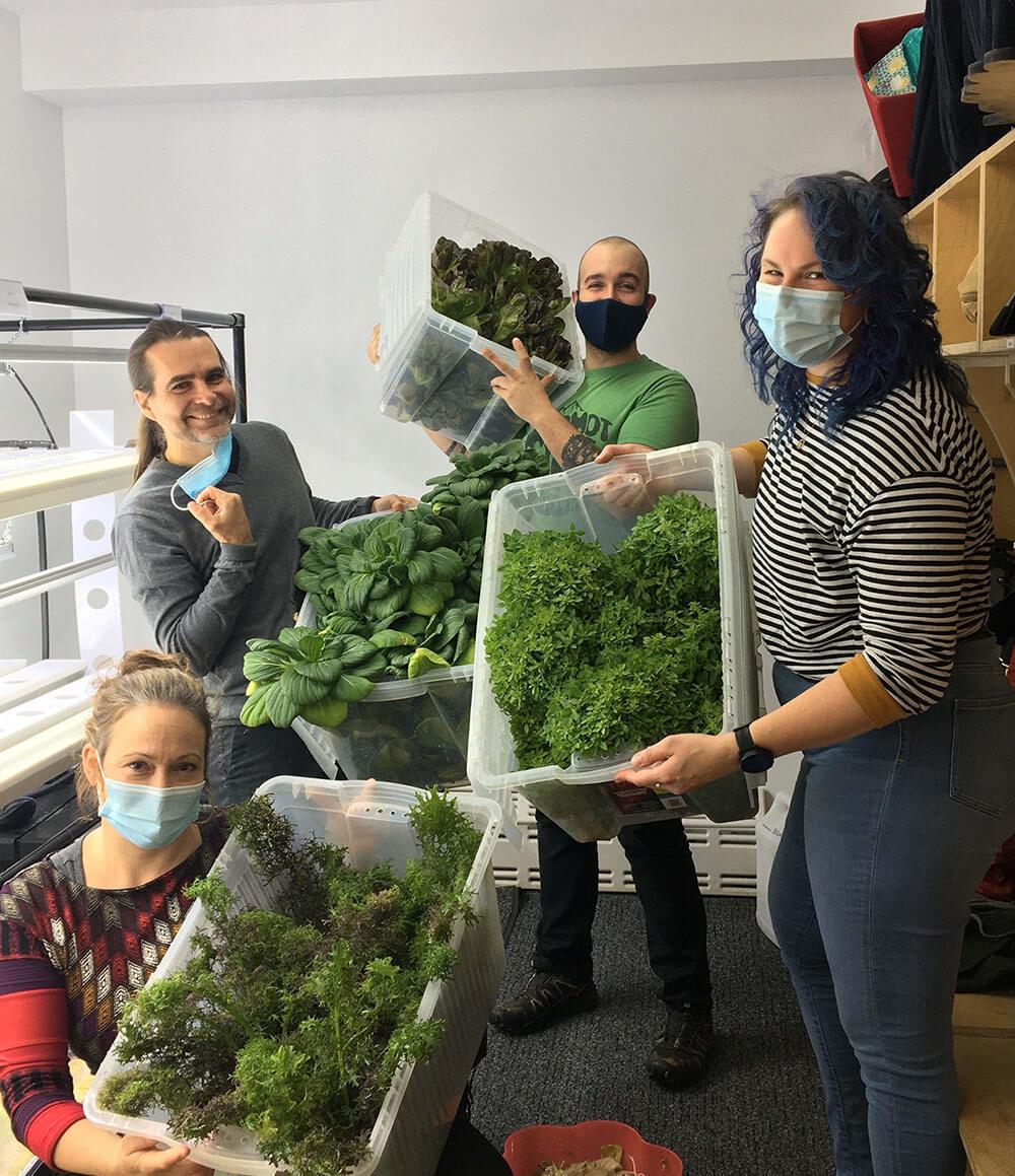 vireo teachers harvest
